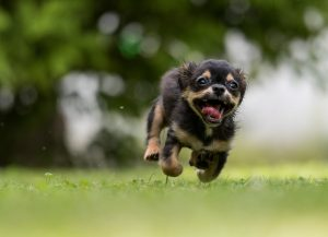 Running action oriented dog having fun :)