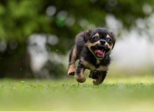 Running action oriented dog having fun :)